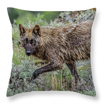 Throw Pillow featuring the photograph A Star In Lamar by Yeates Photography