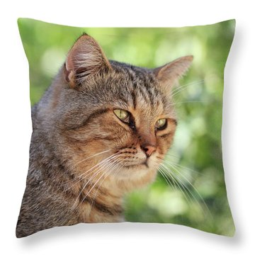 A Stray Cat In A Garden Throw Pillow by Stephan Grixti