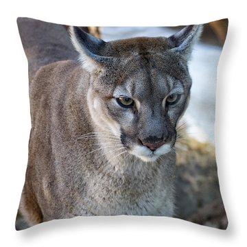 A Stunning Mountain Lion Throw Pillow