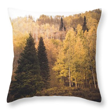 Throw Pillow featuring the photograph A Subtle Glow by The Forests Edge Photography - Diane Sandoval