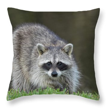 A Surprised Raccoon Throw Pillow