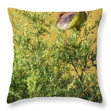 A Tad Ruffled Throw Pillow