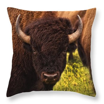 A Thoughful Moment Throw Pillow