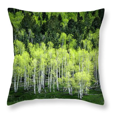 A Thousand Shades Of Green Throw Pillow by The Forests Edge Photography - Diane Sandoval