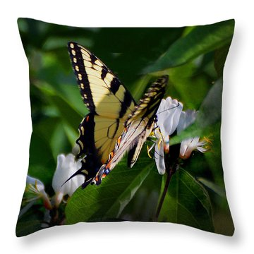 A Tiger Swallowtail Throw Pillow by Kathleen Stephens