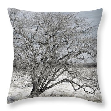 A Tree In Canaan Throw Pillow