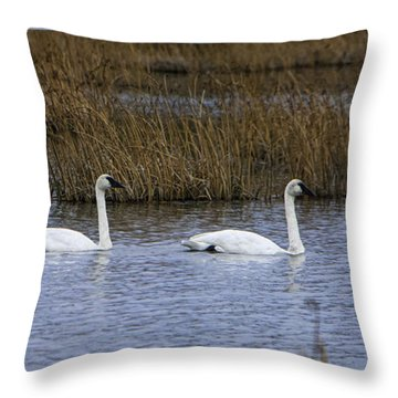 A Trio Of Swans Throw Pillow