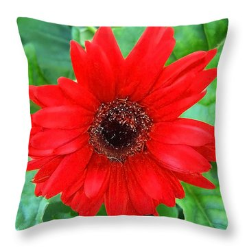 Throw Pillow featuring the photograph A True Red by Sandi OReilly