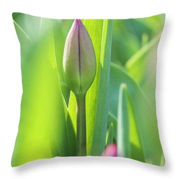 Green Pink Wall Art - Spring Tulips Keukenhof Flower Garden Photography Art Print Throw Pillow