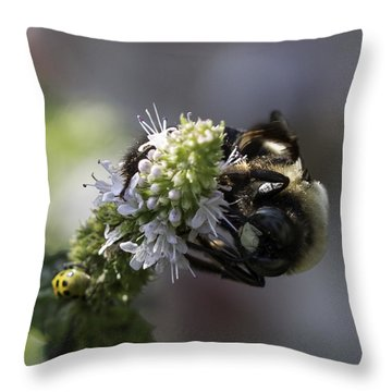 A Twofer Throw Pillow by Cathy Donohoue