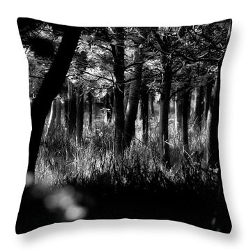 Throw Pillow featuring the photograph A Walk In The Woods by Jeremy Lavender Photography