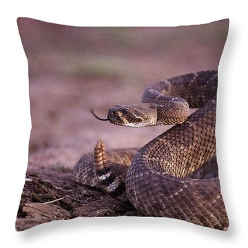 A Western Diamondback Rattlesnake Throw Pillow