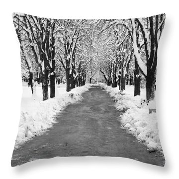 A Winter's Path Throw Pillow by Rae Tucker