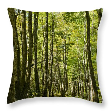 A Woodsy Trail Throw Pillow