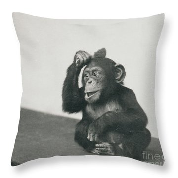 A Young Chimpanzee Playing With A Brush Throw Pillow