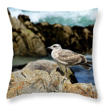 A Young Western Gull At Pacific Grove Throw Pillow