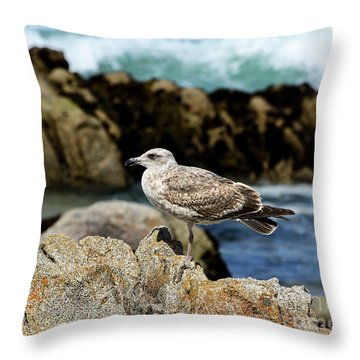 Throw Pillow featuring the photograph A Young Western Gull At Pacific Grove by Susan Wiedmann