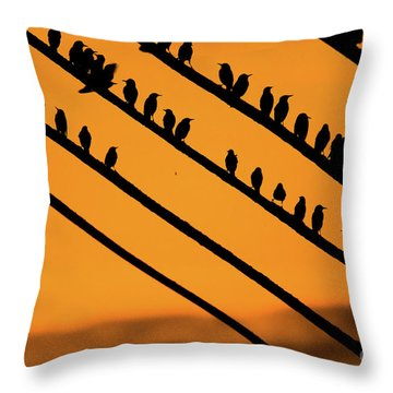 Aberystwyth Starlings At Dusk Throw Pillow