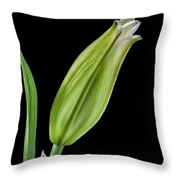 White Oriental Lily About To Bloom Throw Pillow by David Perry Lawrence
