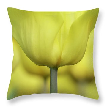 Abstract Yellow Tulips Flowers Photography Online Art Print Shop Throw Pillow
