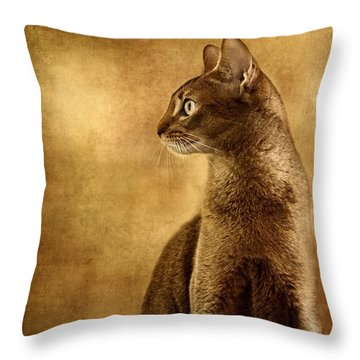 Abyssinian Cat Portrait 3 Throw Pillow
