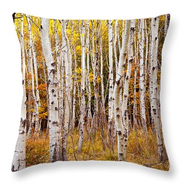 Acadia Birch Throw Pillow