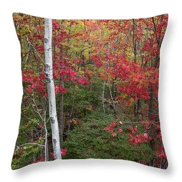 Acadia Fall Colors Throw Pillow