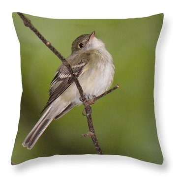 Acadian Flycatcher Throw Pillow by Alan Lenk