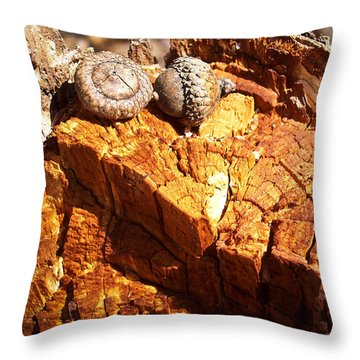 Throw Pillow featuring the photograph Acorns - The Cycle Of Life Continues  by Shawna Rowe