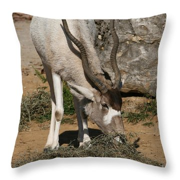 Addax Throw Pillow