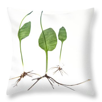 Adder'stongue Throw Pillow