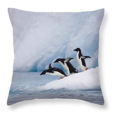Adelie Penguin Trio Diving Throw Pillow by Suzi Eszterhas