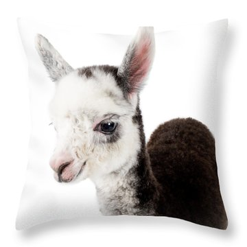 Adorable Baby Alpaca Cuteness Throw Pillow by TC Morgan