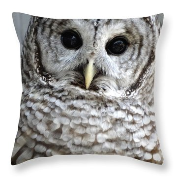 Adorable Barred Owl  Throw Pillow by Rebecca Overton