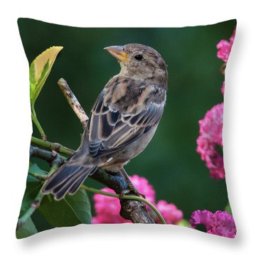 Adorable House Finch Throw Pillow