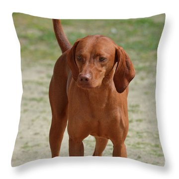 Adorable Redbone Coonhound Standing Alone Throw Pillow by DejaVu Designs