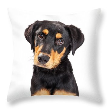 Adorable Rottweiler Crossbreed Puppy Close-up Throw Pillow