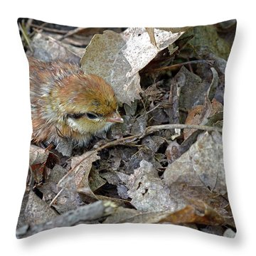 Adorable Ruffed Grouse Chick Throw Pillow