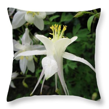 Throw Pillow featuring the photograph Adoration by Carol Sweetwood