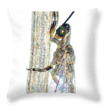 Adult Ant Lion Throw Pillow