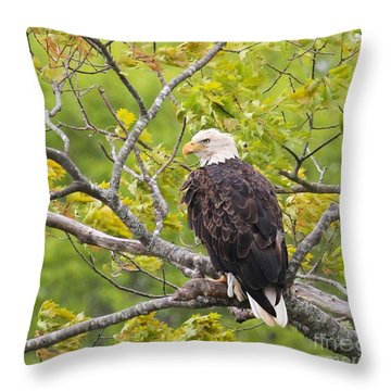 Adult Bald Eagle Throw Pillow