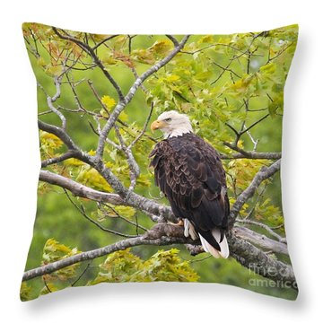 Adult Bald Eagle Throw Pillow by Debbie Stahre