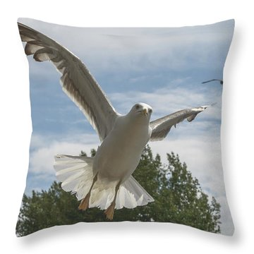 Adult Seagull In Flight Throw Pillow