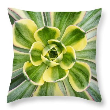 Aeonium Sunburst Throw Pillow