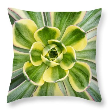 Aeonium Sunburst Throw Pillow