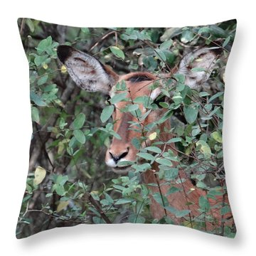 Africa - Animals In The Wild 4 Throw Pillow