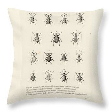 Throw Pillow featuring the drawing African Beetles by Bernhard Wienker