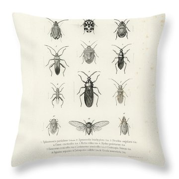 African Bugs And Insects Throw Pillow