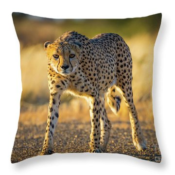 African Cheetah Throw Pillow by Inge Johnsson
