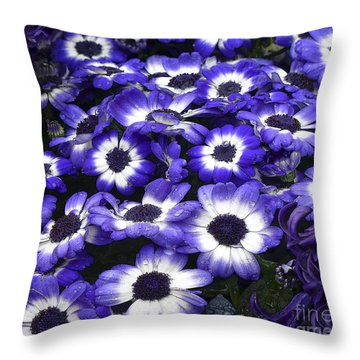 African Daisy Purple And White Throw Pillow by Dee Flouton